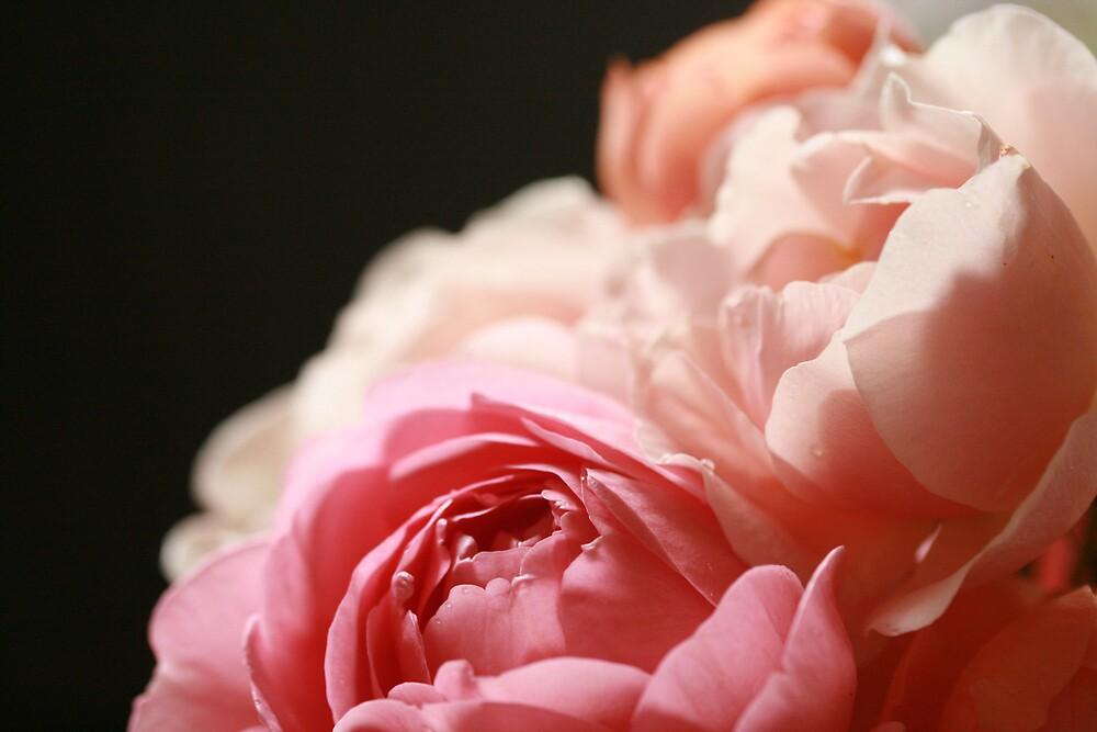 David Austin rose bouquet by JulesVandermaat
