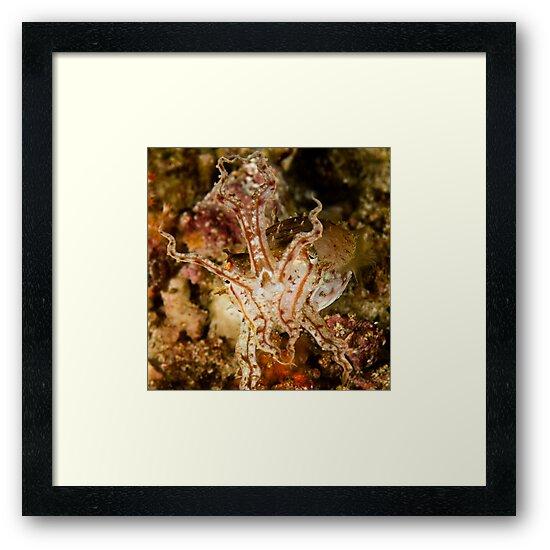 Pissed Cuttlefish by Dan Sweeney