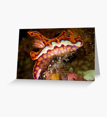 MiaMira Magnifica 2 Greeting Card
