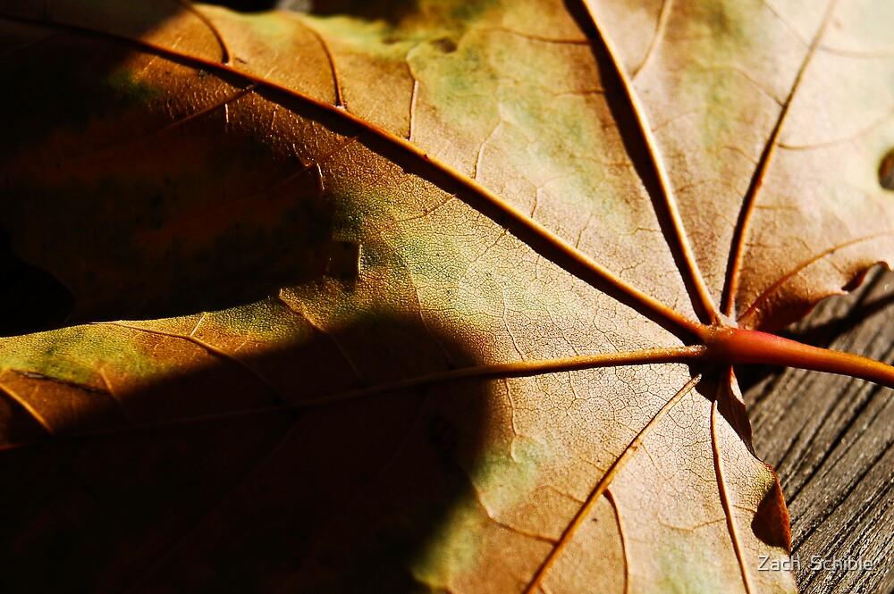 Leaf by Zach  Schible