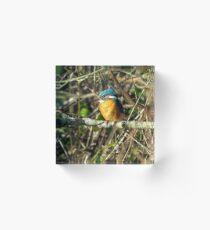 Female Kingfisher enjoying the Sun Acrylic Block