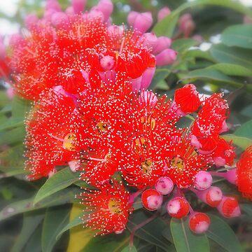 Bush Beauty by SaharaLily