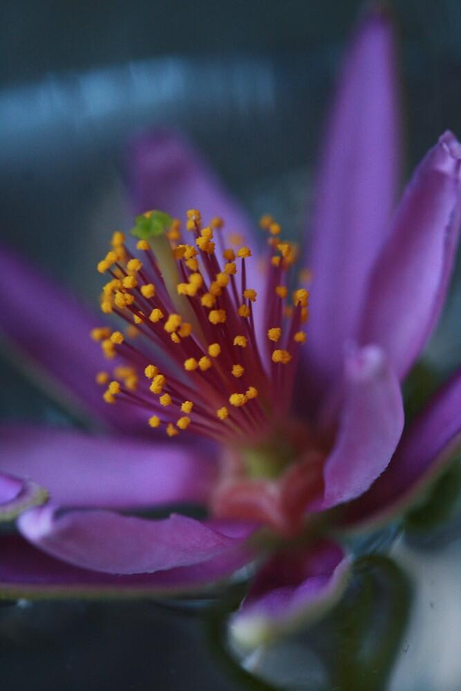 pretty purple by JulesVandermaat