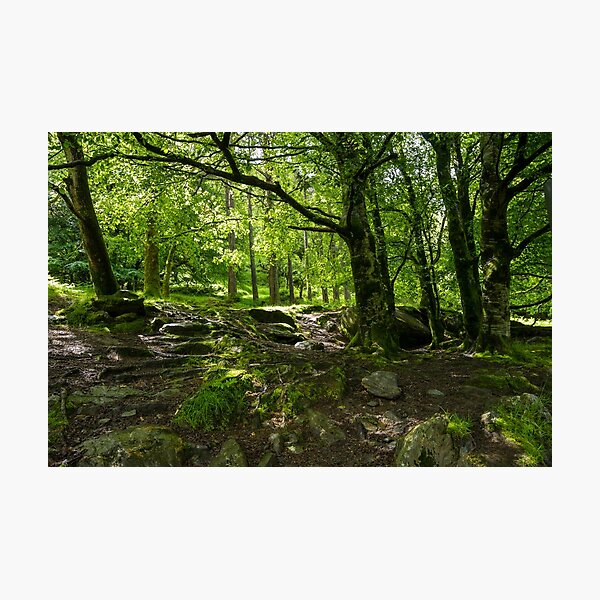 Glendalough Forest  Photographic Print