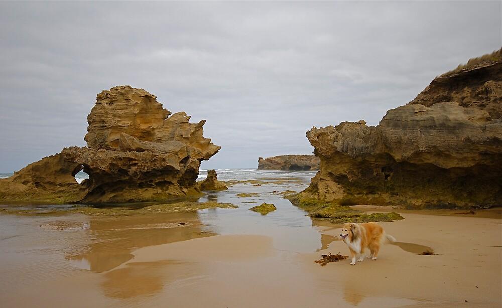 Beachcomber by Roslyn Slater