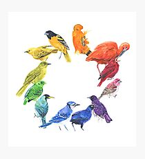 Bird colour wheel Photographic Print