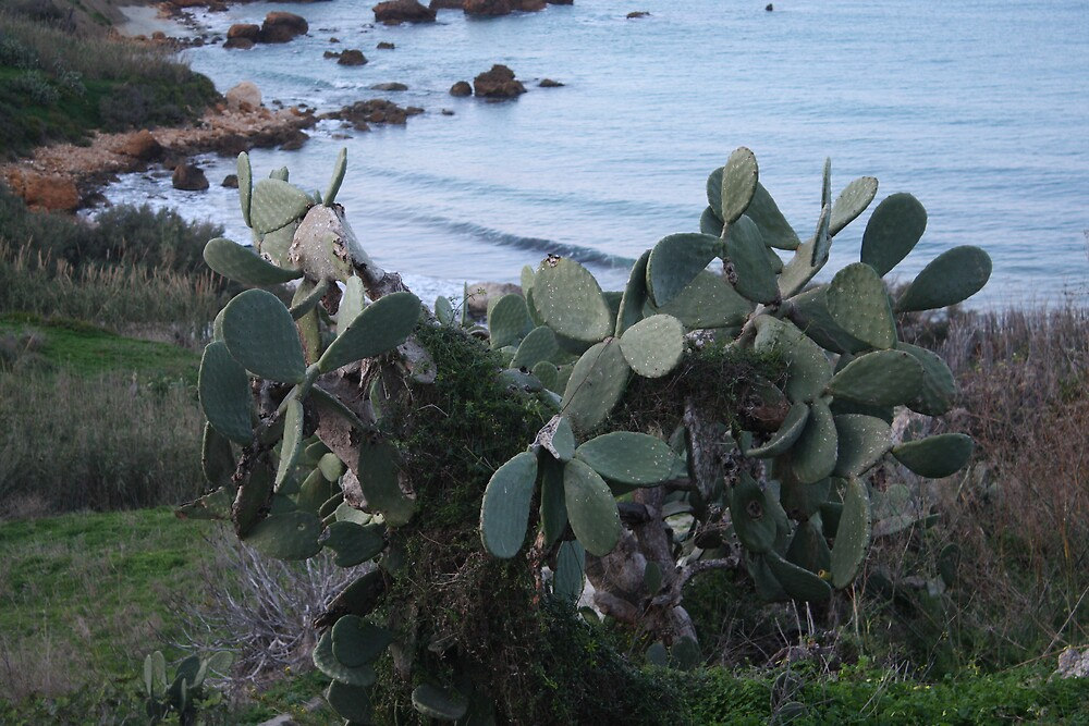 PRICKLY Pear by Stefan Casaletto