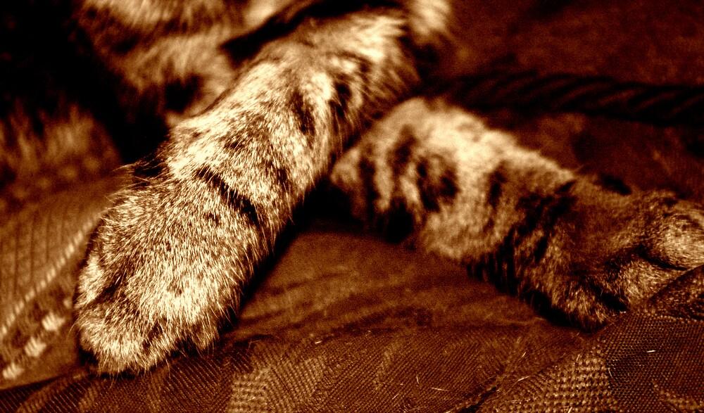 resting feet by Harry Hutchin