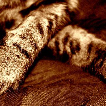 resting feet by HarryHutchin