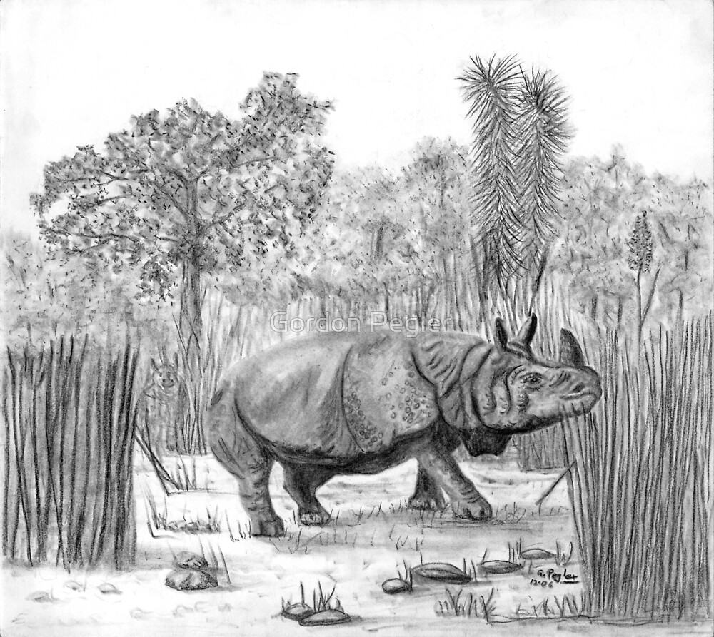 Rhino -charcoal by Gordon Pegler