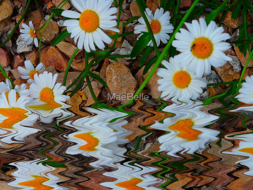 Reflecting Daisys by MaeBelle