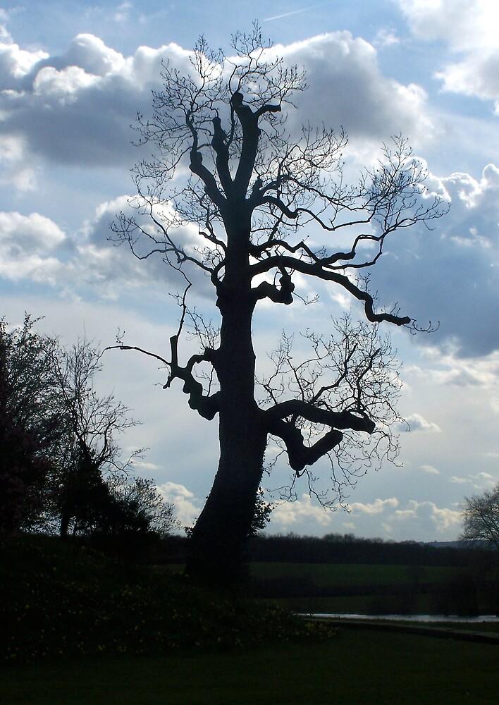 Haunted Tree by sjmphotos