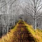 winter avenue by Janis Read-Walters
