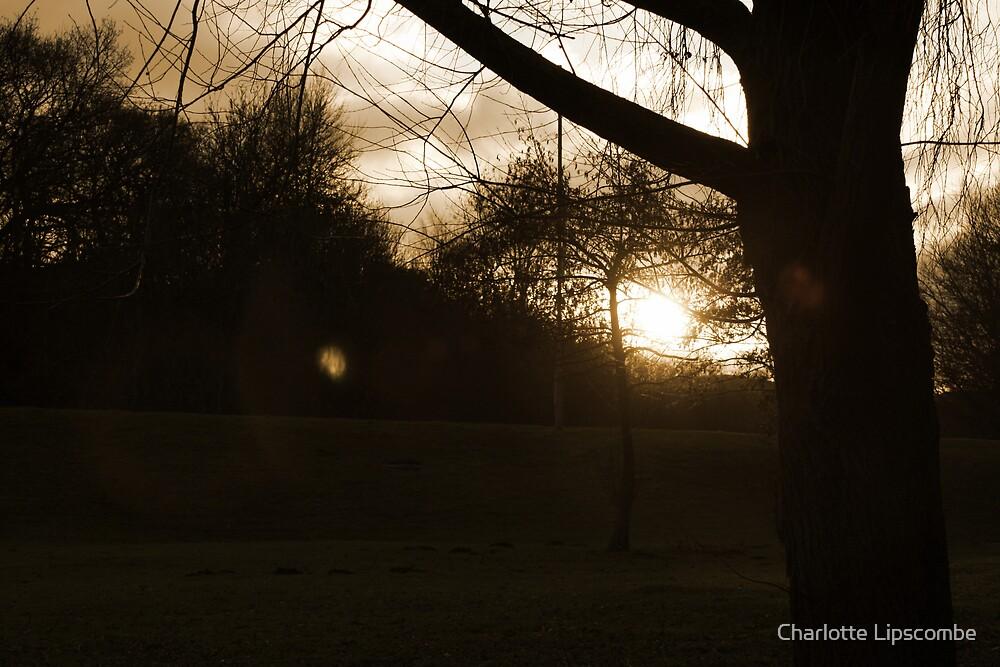 beauty by Charlotte Lipscombe