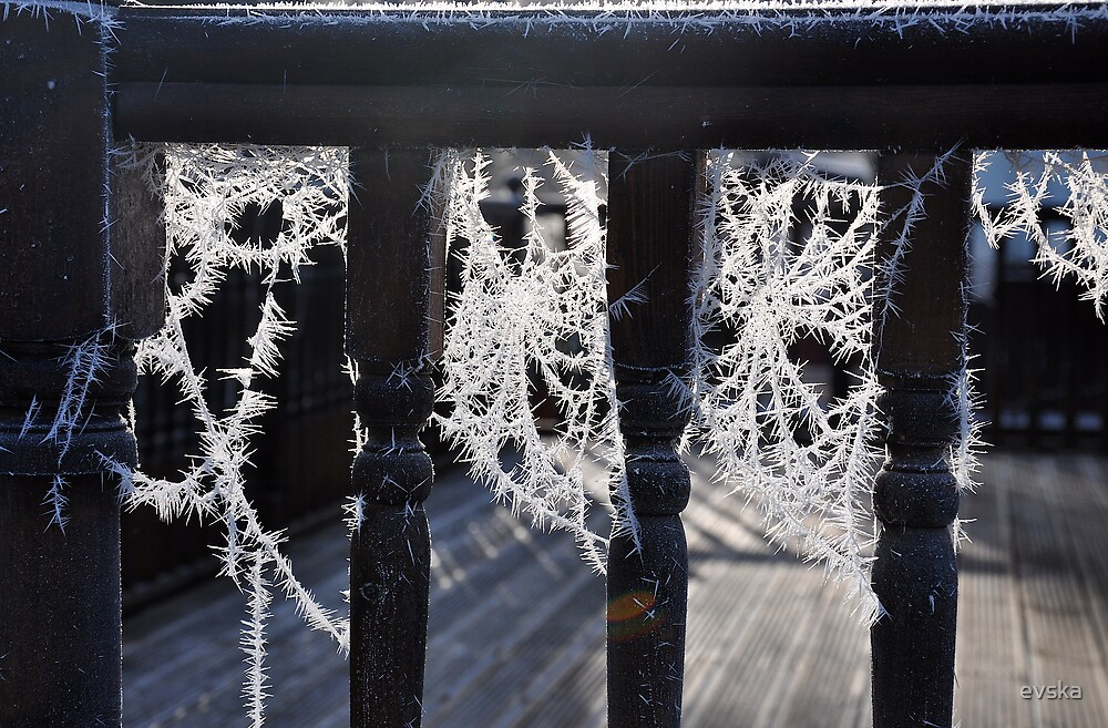 winter laces by evska