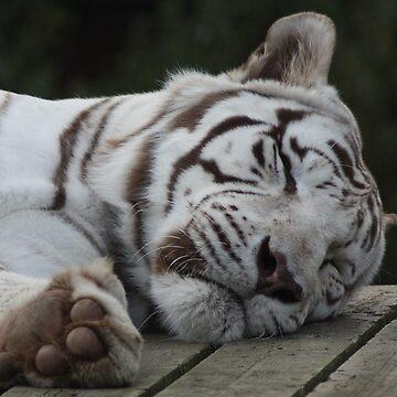 Sleepy Siberian Tiger by sjmphotos