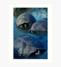 Galapagos Tortoises in Pond Art Print
