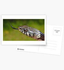 Grass Snake in UK Postcards