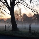 misty morning by funkybunch
