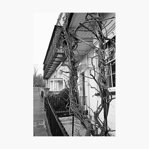 clifton Photographic Print