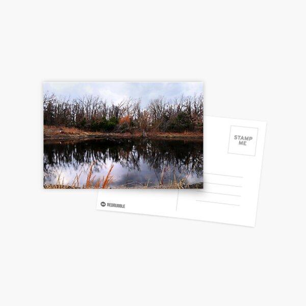 Pond Life Postcard