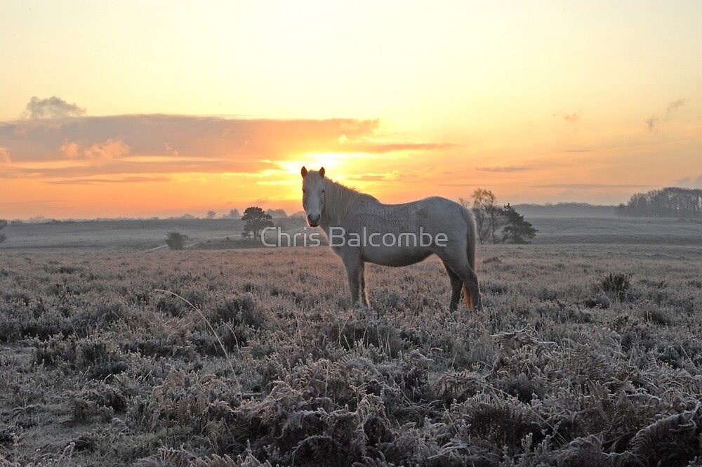 Frosty Morning in UK's New Forest by Chris Balcombe