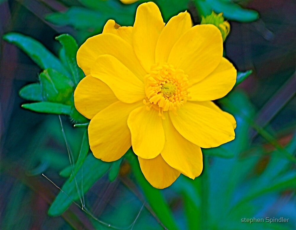 Large Yellow Flower by stephen Spindler