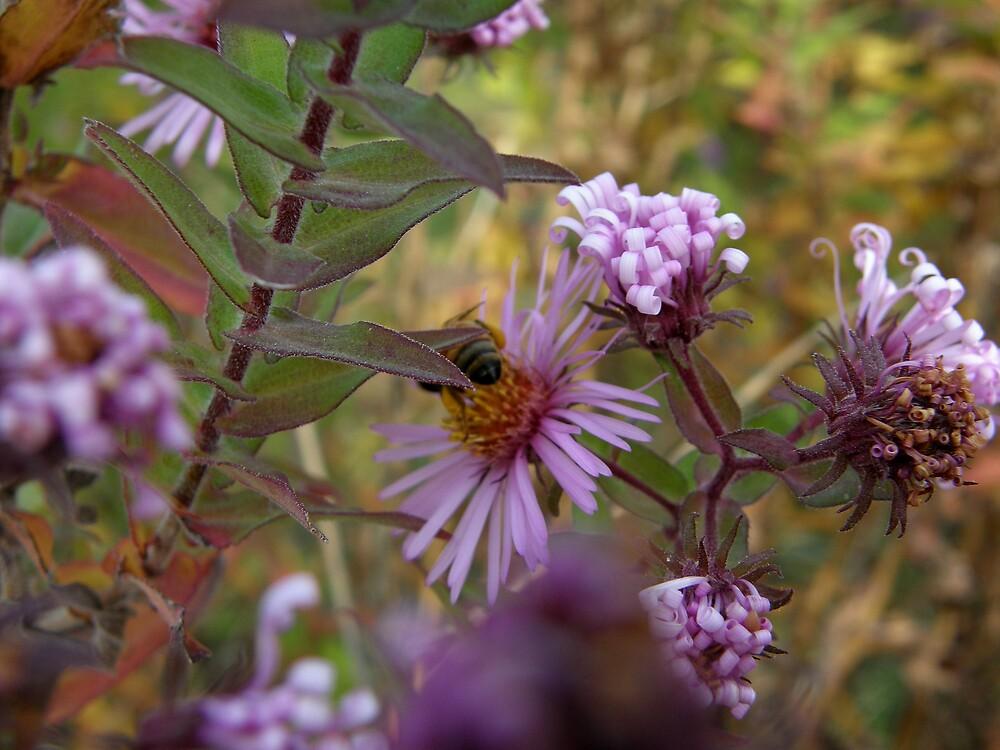 purple passion by Cricket Jones