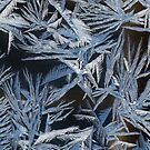 Jack Frost On The Prowl by artwhiz47