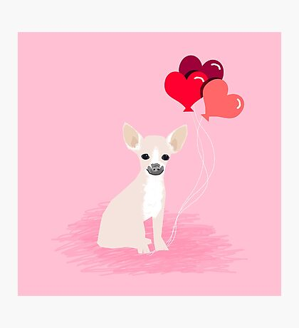 Chihuahua love hearts valentines day cute gifts for chiwawa lovers pet must haves Photographic Print