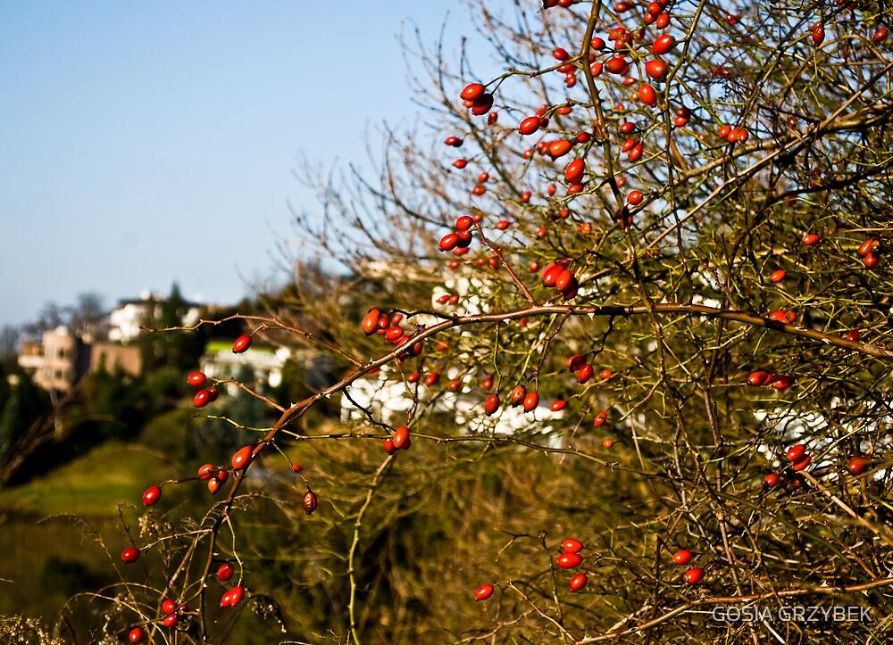 a december day by GOSIA GRZYBEK