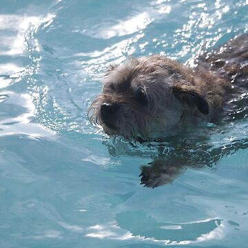 Swimming Border Terrier by Joliver42
