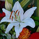 LILY WHITE by Marilyn Grimble