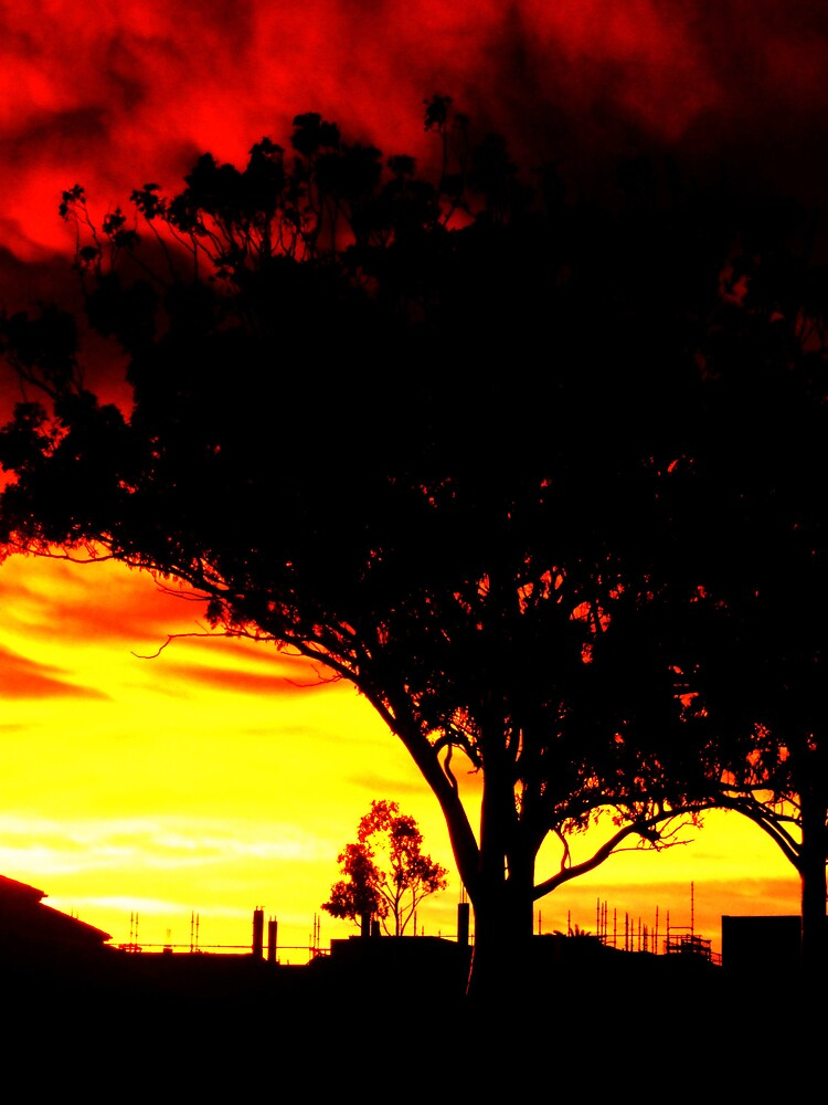 Tree in the sunset by Gracie Townsend