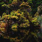 The Swamp - Catlins - New Zealand by Imi Koetz