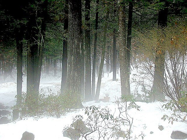 Winter Fog by Linda Marlowe