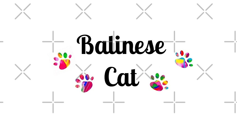 Balinese Cat - star quality by myfavourite8