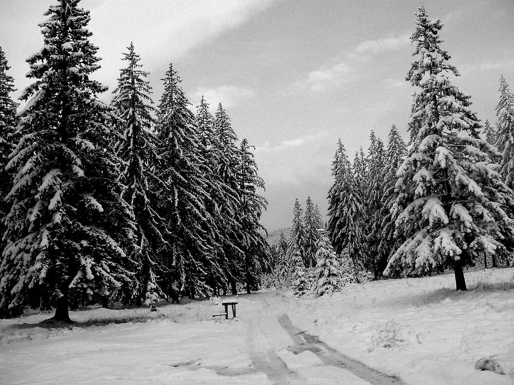 winter landcape by Rita Iszlai