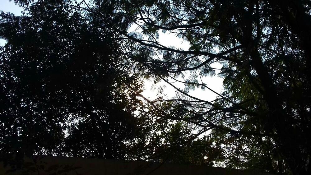 Hidden sky by Nilu Mishra
