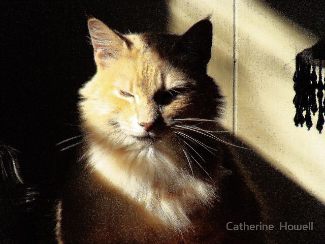 One Ticked Off Kitty by Catherine  Howell