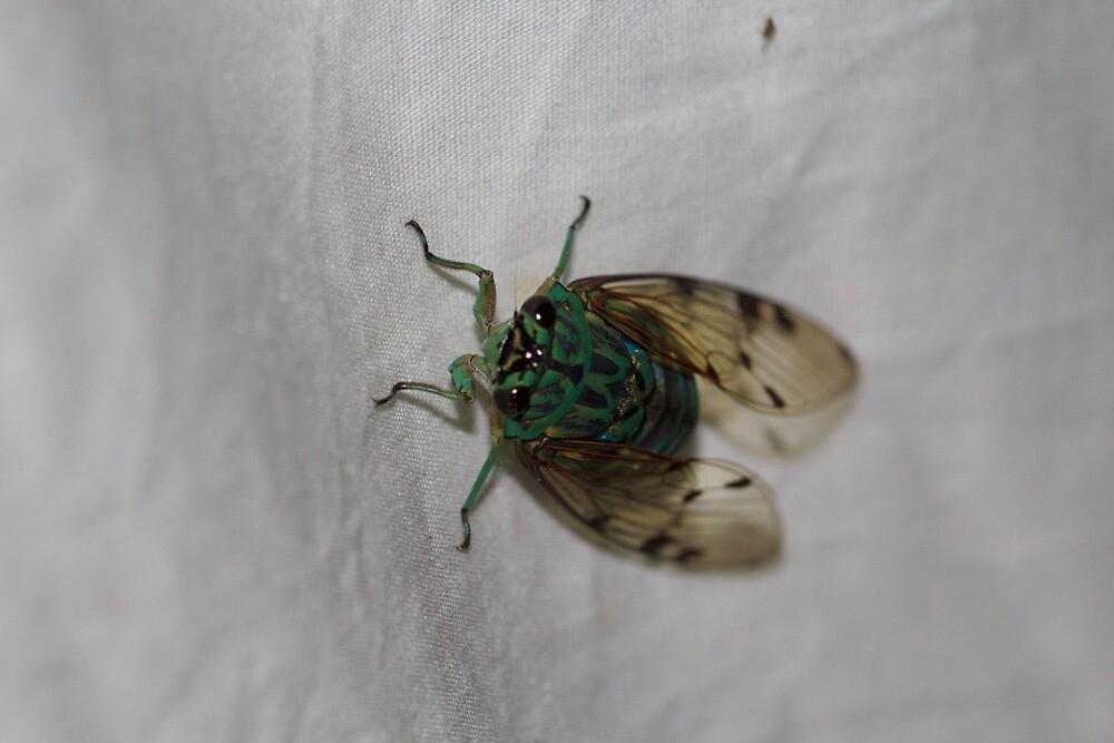 Green Cicada by LilDude
