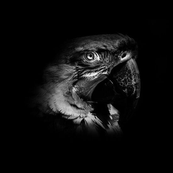Parrot Poise black and white by RichardSayer