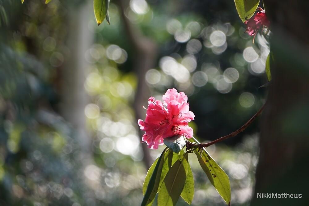 Rhododendron by NikkiMatthews