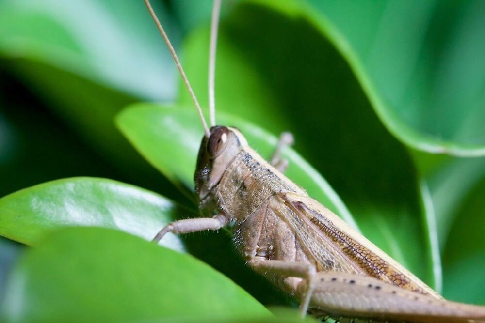 Grasshopper by LilDude