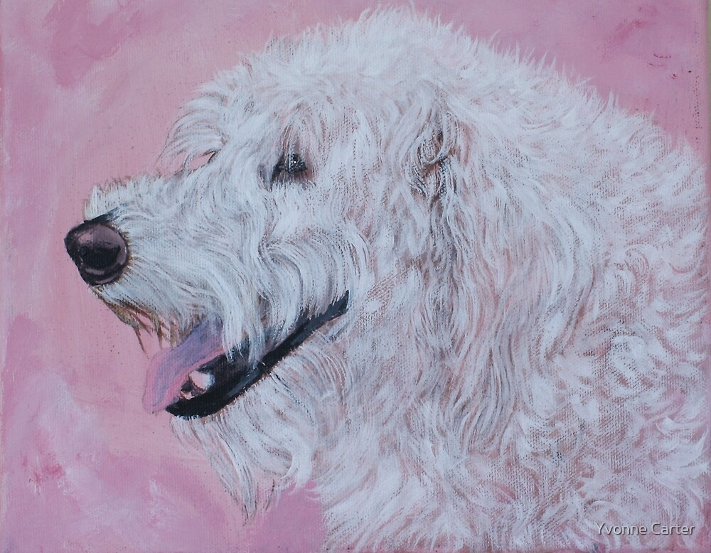 Cream Labradoodle by Yvonne Carter