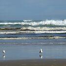 Seagulls by Kim Edmonds