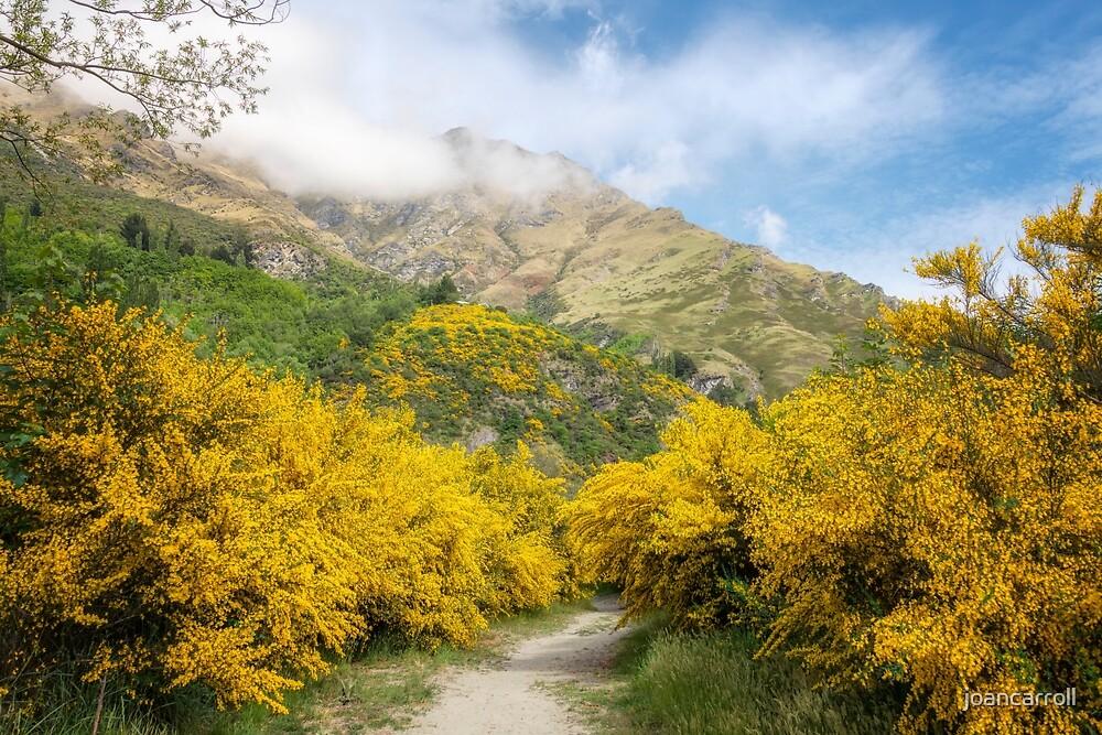 Springtime in New Zealand by joancarroll