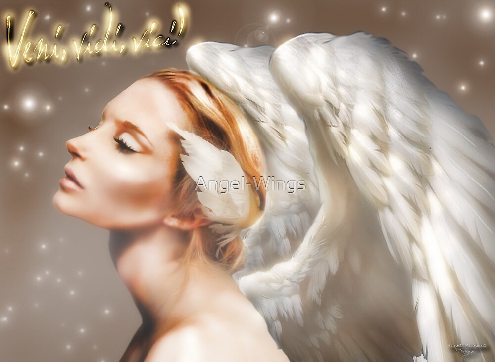 Vini Vidi Angel by Angel-Wings