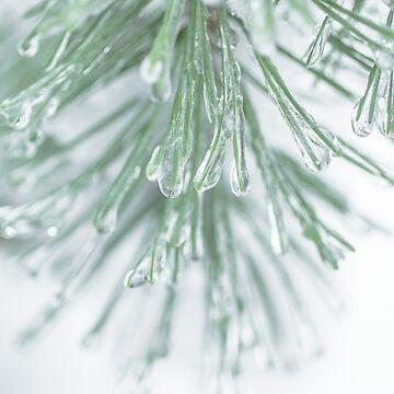 Icy Winter Pine Needles by peanutroaster