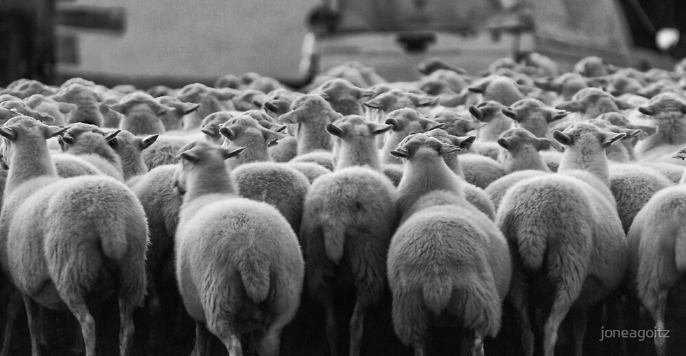 Sheep / Ovejas by joneagoitz